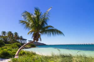 Palm tree, beach, water view from Bahia Park in the Florida Keys